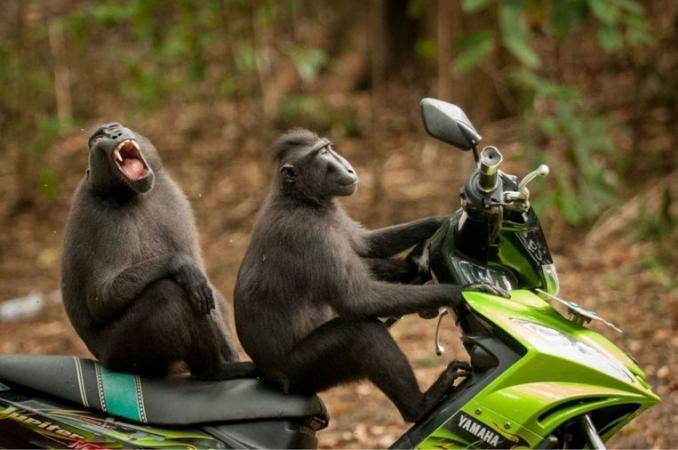 © Katy Laveck-Foster/Comedy Wildlife Photo Awards