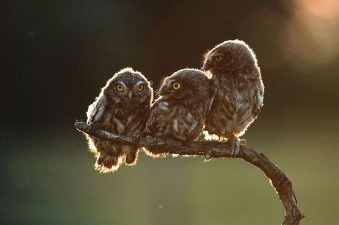 © Tibor Kercz/Comedy Wildlife Photo Awards