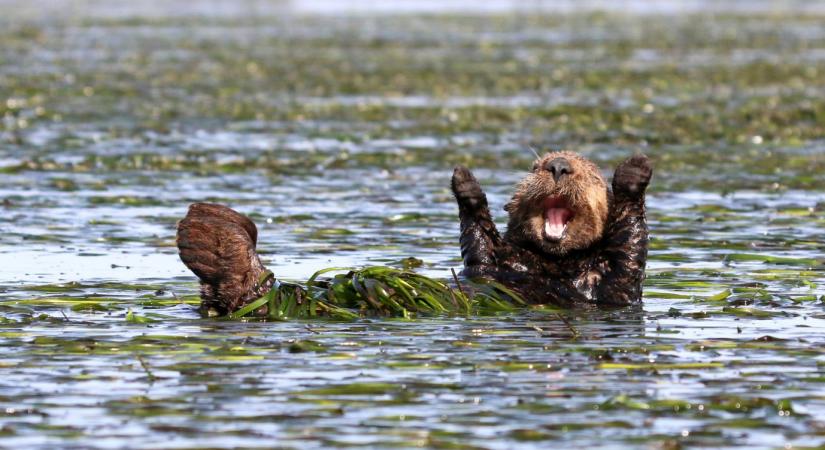 © Penny Palmer/Comedy Wildlife Photo Awards