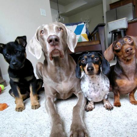 Harlow, Sage, Indiana & Reese