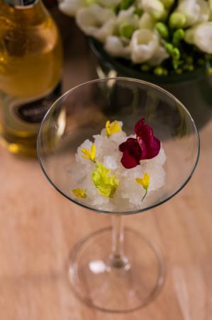 Strongbow Snowflower