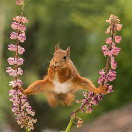 Finalisten Comedy Wildlife Photography Awards