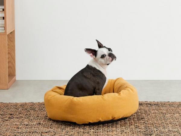 Hondenbedje