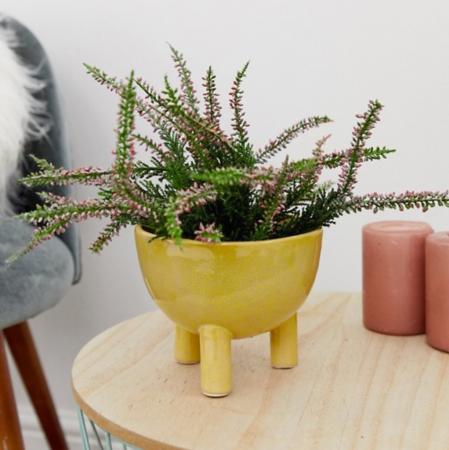 Plantenpot met poten