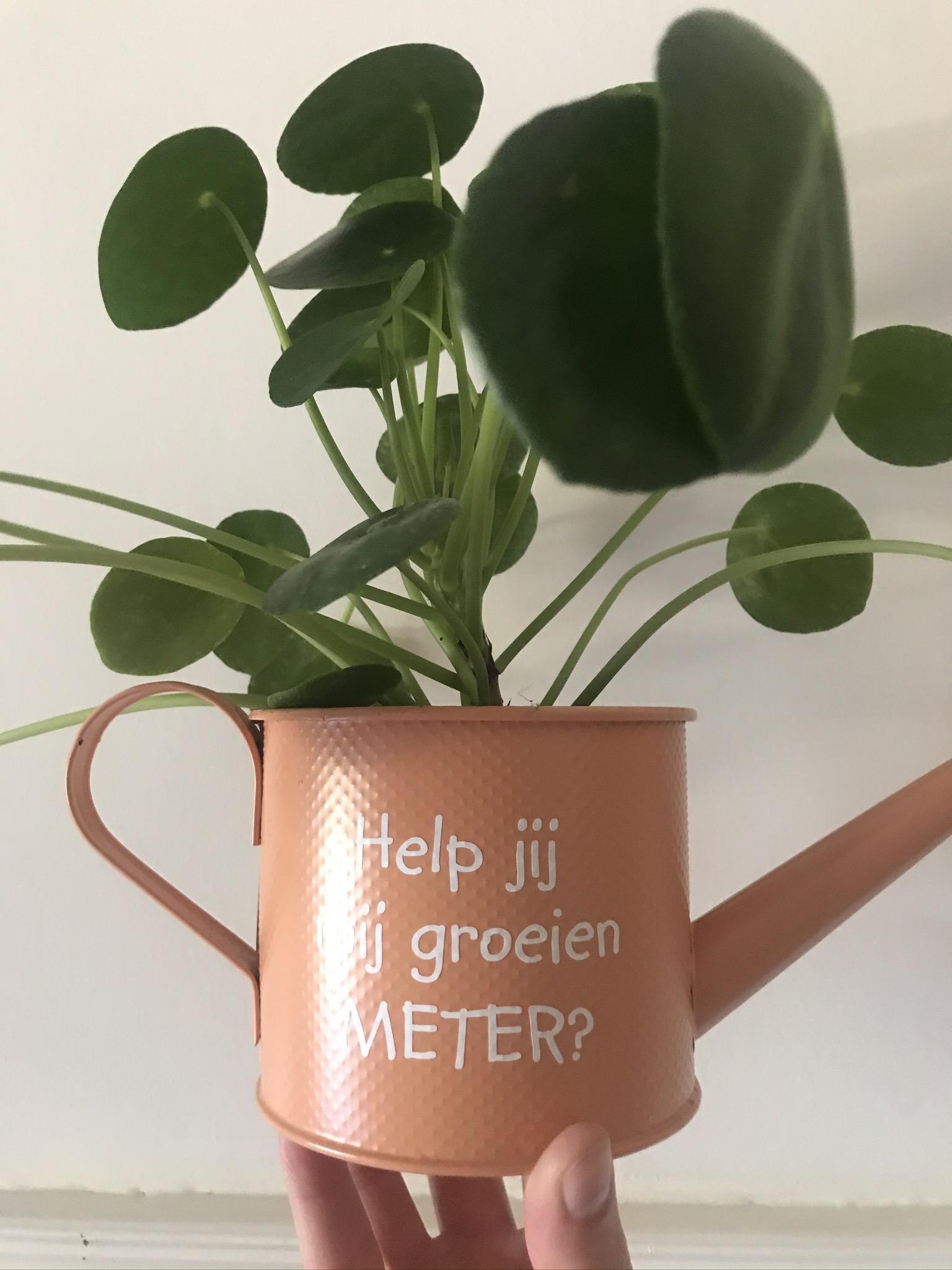Meter en peter