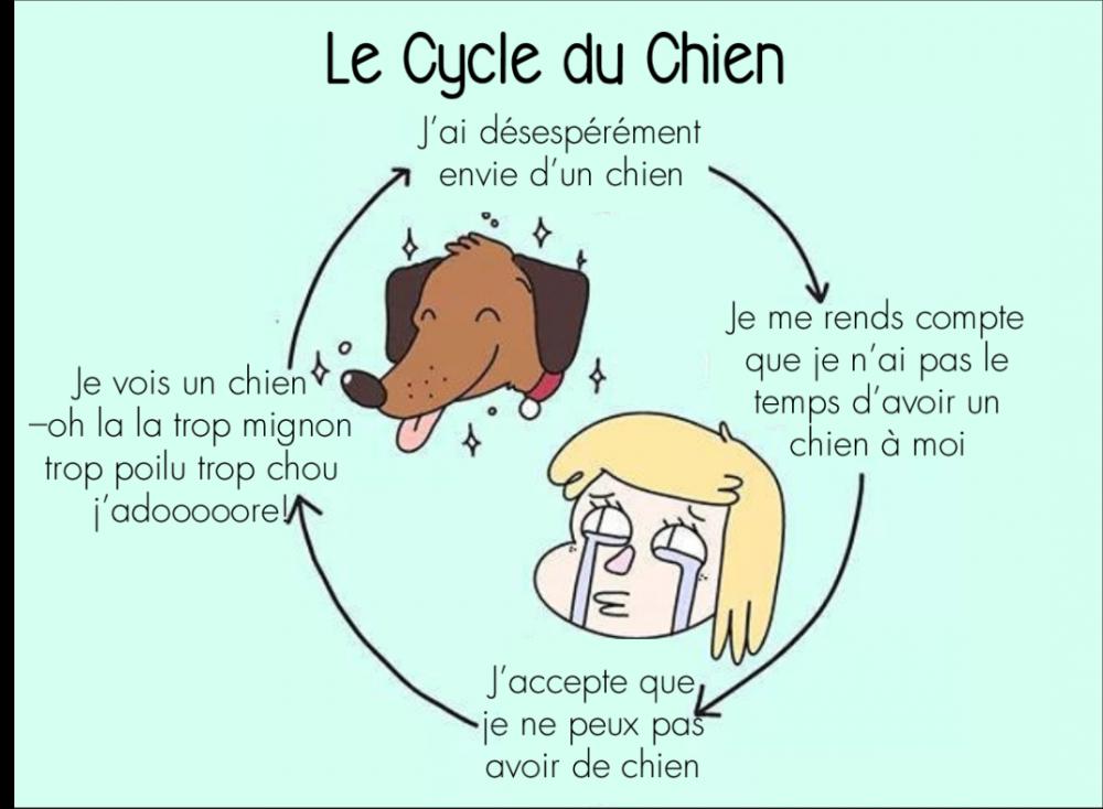 cycle du chien