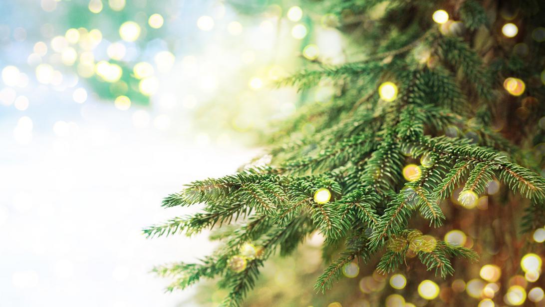 Dankzij Deze Tips Verliest Je Kerstboom Zijn Naalden Minder Snel