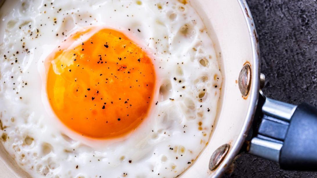 Aliments riches en proteines et lipides