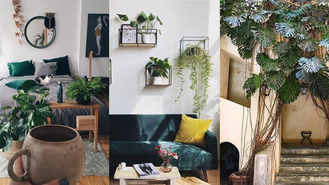 Interieur Ideeen Com.Green Balance Waarom De Kleur Groen In Je Interieur Zo N Goed Idee Is