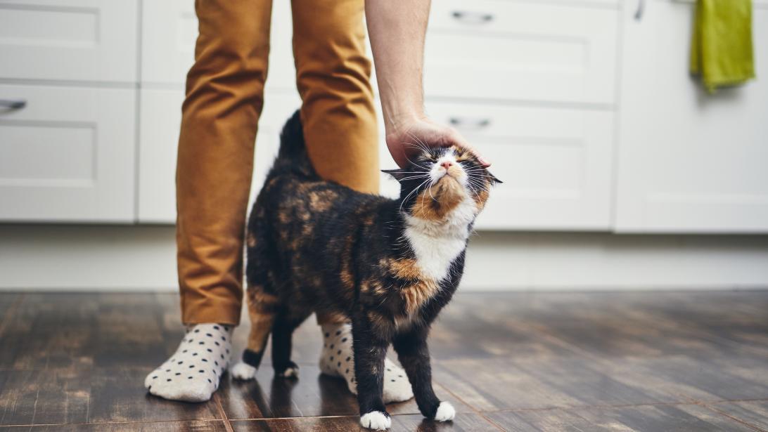 Chats Chiens Comment Adopter Un Animal De Compagnie En Belgique