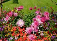jardin parterre fleurs