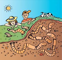 ver de terre-jardin-dessin