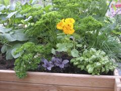 Jardinière légumes + fleurs henricot 2014