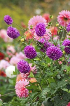 6 jolies fleurs d\'automne - Femmes d\'Aujourd\'hui