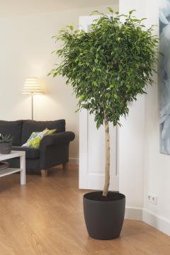 10 plantes d 39 int rieur d polluantes femmes d 39 aujourd 39 hui. Black Bedroom Furniture Sets. Home Design Ideas