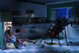Comment se débarrasser des insectes à la maison