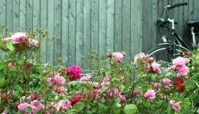 palissade jardin clotûre