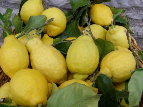Faites votre propre limoncello