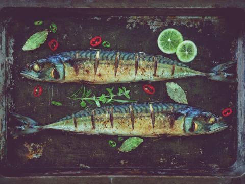 Welke vis voor welke maand?