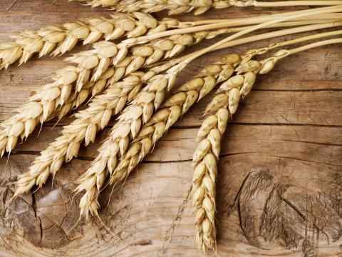 Graan-gids: meel en granen om in je gerechten te gebruiken