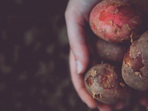 Je eigen aardappels kweken als je weinig plaats hebt? Het kan!