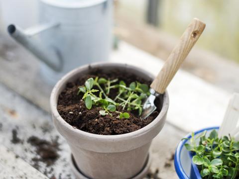 Slimme tips om binnen groenten te kweken