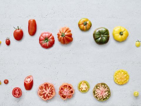 De juiste tomaat voor elk gerecht 1