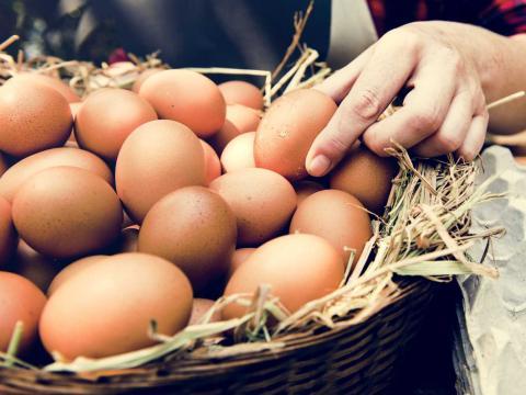 7 dingen die je nog niet wist over eieren