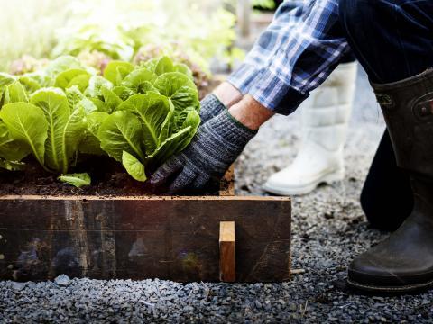 De Vierkante Meter aflevering 4: tuinieren door weer en wind 3