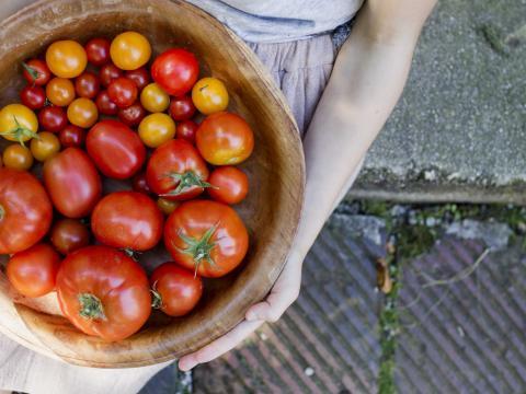 Met dit trucje smaken je tomaten rijper