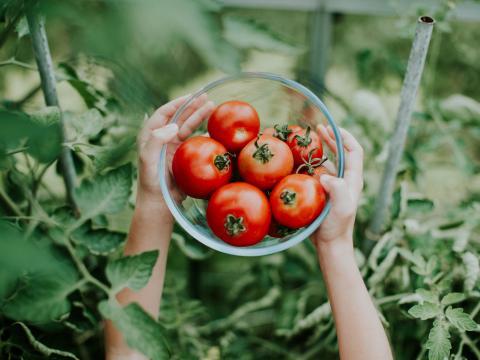 jullie vragen over tomaten