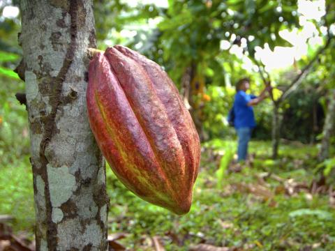 Dominique Persoone over zijn cacao plantage in Mexico