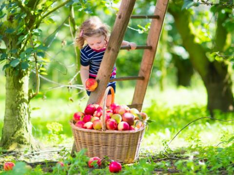 Op deze zelfplukweides oogst je zelf groenten en fruit