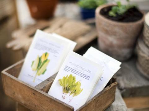 Indoor tuinieren: wat kun je binnen zaaien?