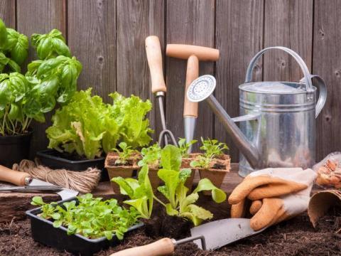 De Vierkante Meter aflevering 4: tuinieren door weer en wind 5