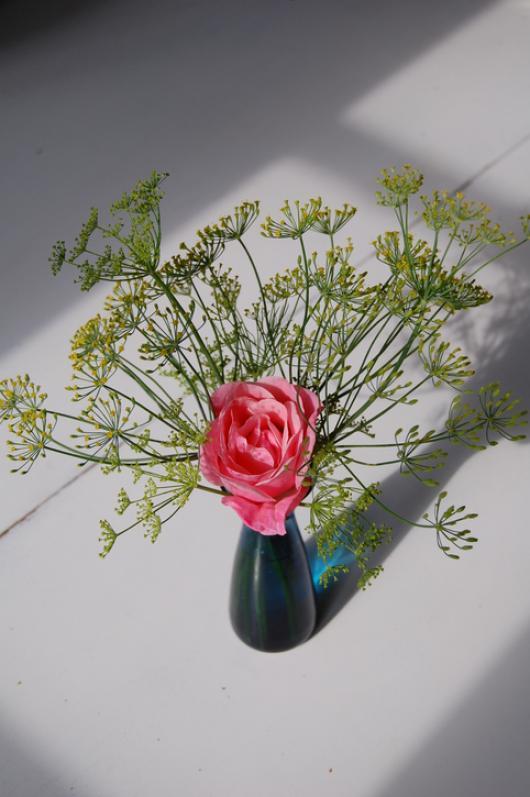 dille rozen planten