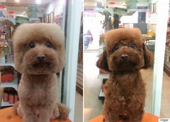 Puppy Japan 3