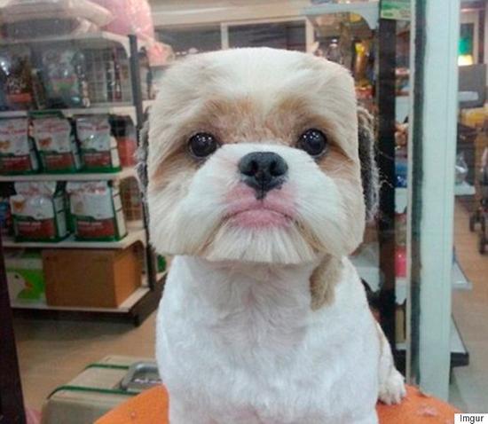 Puppy Japan 4
