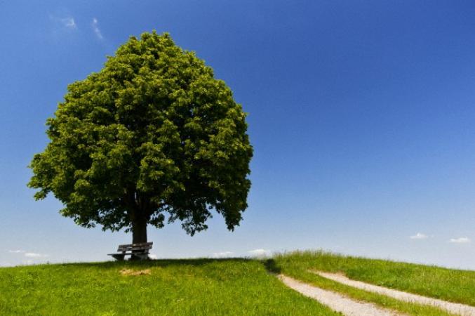 Pique-niquer sous l'arbre de l'amour