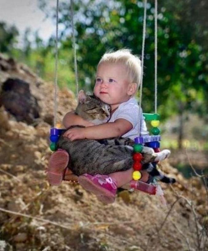 Amitié entre un béb et un chat