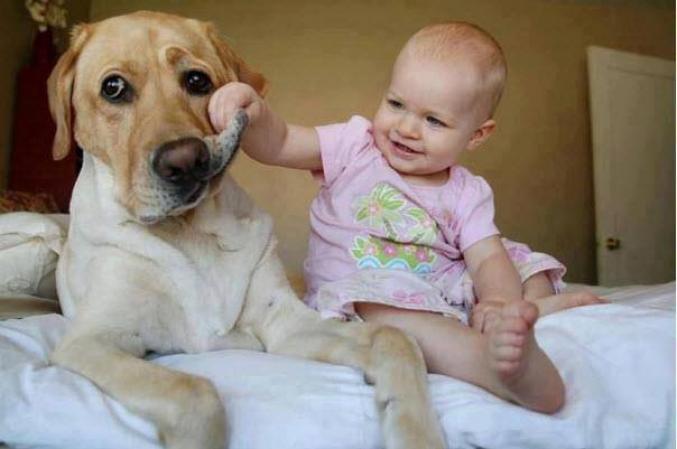 Amitié entre un enfant et un chien
