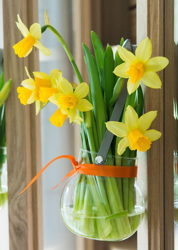 C'est jaune et ça fleurit à Pâques