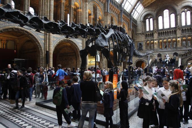 Londres - Musée Histoire Naturelle
