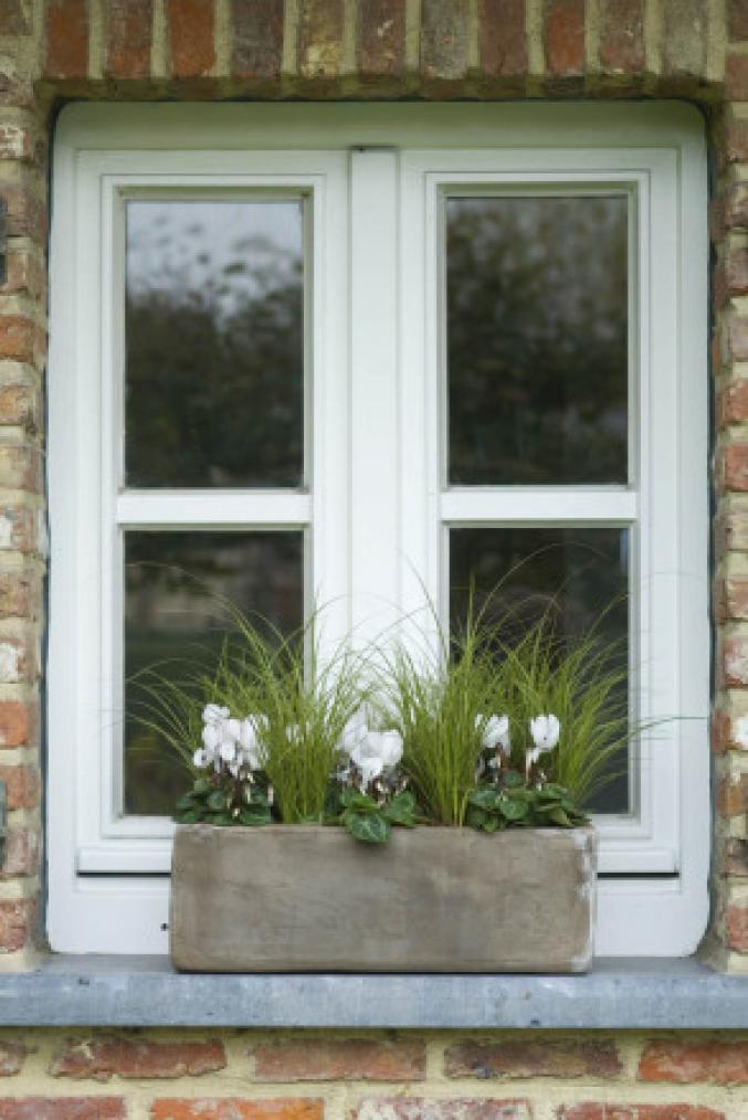 Carex et cyclamen