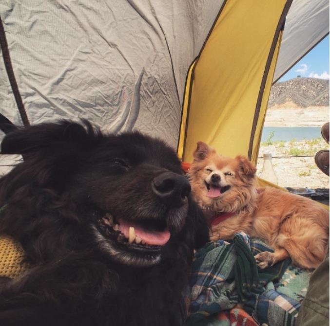 Des chiens fans de camping