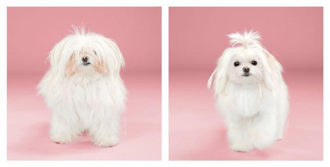 9 chiens avant et après le toilettage!