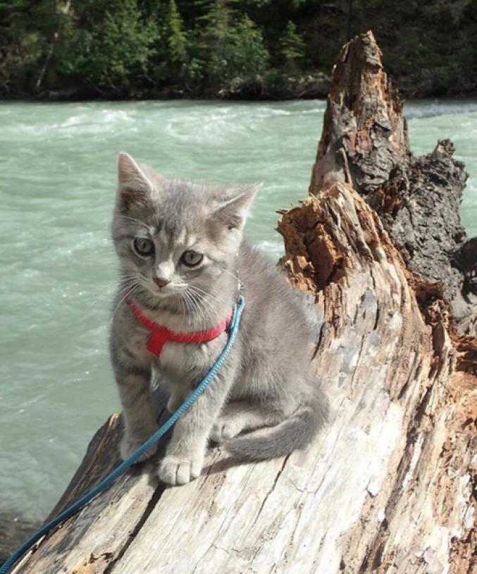 Des chats en vacances