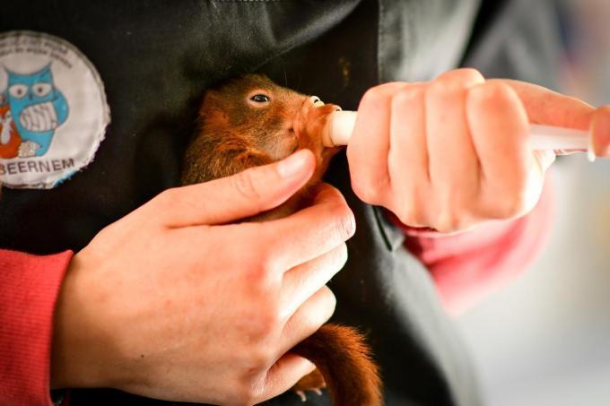Gevonden dieren kunnen nog steeds naar het opvangcentrum gebracht worden.