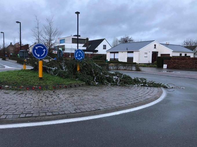 Kerstbomen blijken niet bestand tegen storm Bella. In Jabbeke viel dit exemplaar om.© JVM