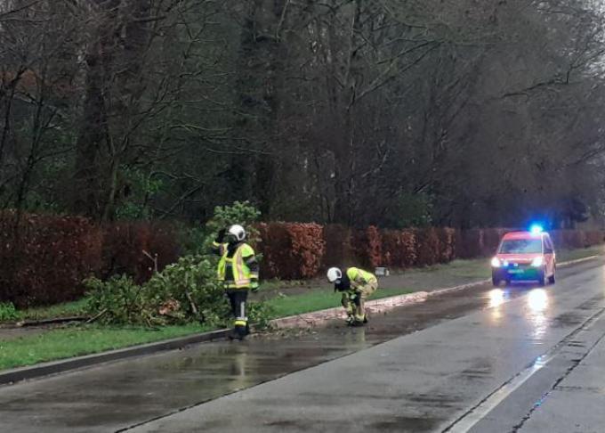 De brandweer moest in de Moorseelsesteenweg in Rumbeke een zware tak van het wegdek verwijderen.© foto SBR